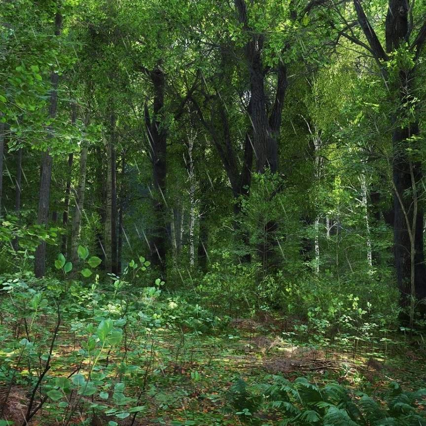 Rainy forest thicket - landscapes live wallpaper [DOWNLOAD ...